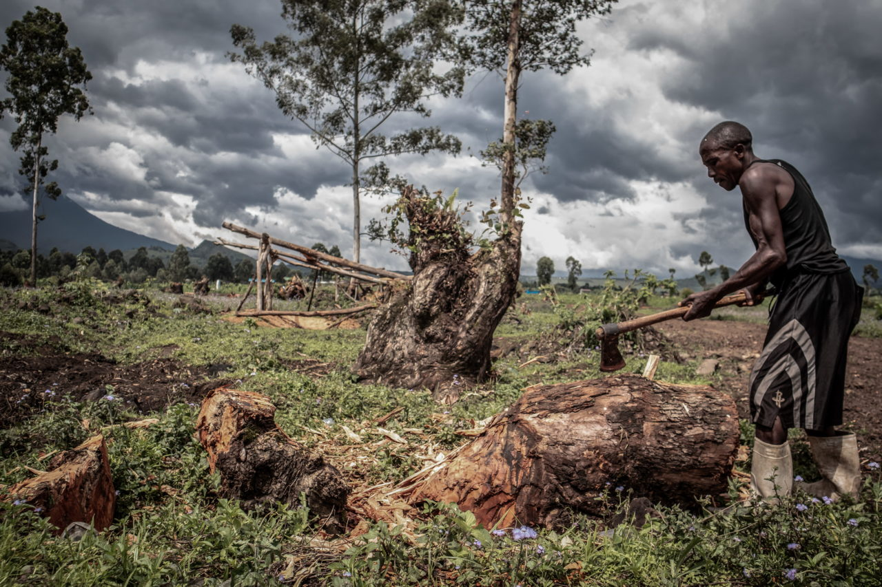 Virunga National Park, DRC, November 2020. A man chops a tree to make charcoal on a swathe of deforested land near the village of Rusayo on the edge of Virunga National Park just north of the eastern Congolese city of Goma. © Guerchom Ndebo for Fondation Carmignac