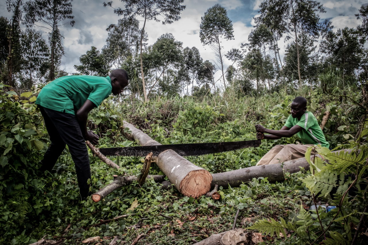 Virunga National Park, DRC, November 2020. Men cut a tree to make charcoal on a swathe of deforested land near the village of Rusayo on the edge of Virunga National Park just north of the eastern Congolese city of Goma. © Guerchom Ndebo for Fondation Carmignac